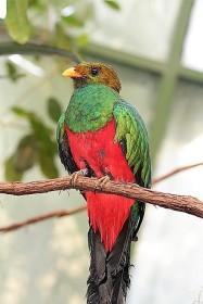 E Quetzal.jpg