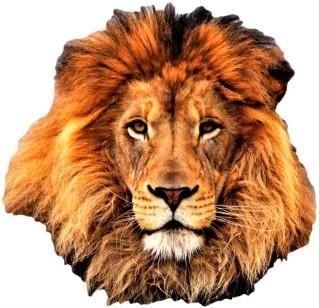 E Lion