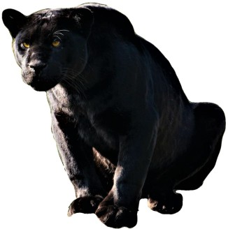 E Panther