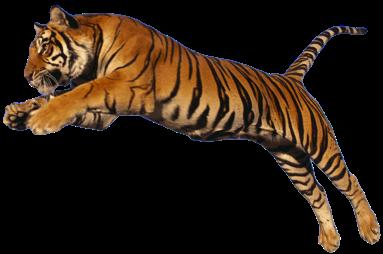 E Tiger 1